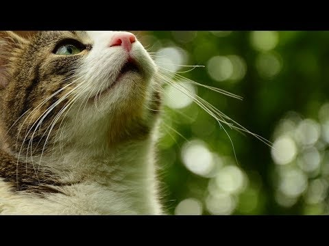 How to Avoid Feeding Your Cat Harmful People Foods - Method 3