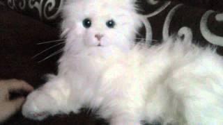 FurReal Friends, Kot Lulu, zabawka interaktywna
