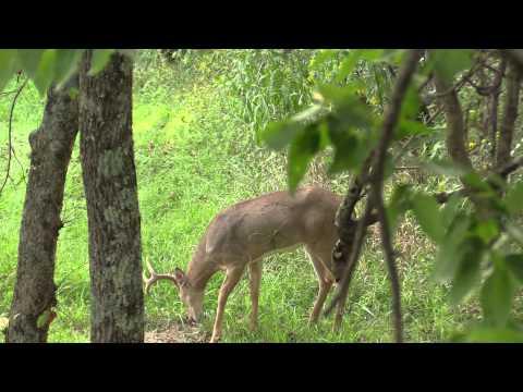 Deer hunting 2015 early season huge success!