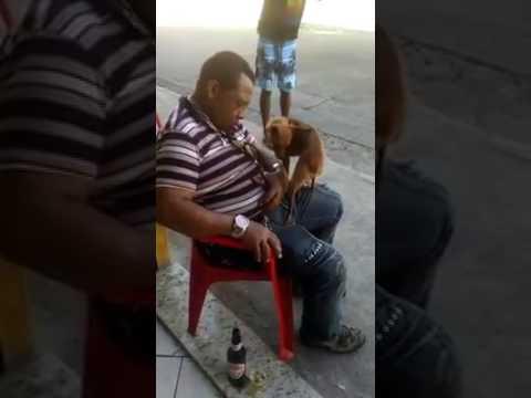 Video of Man seriously romanced by a dog while deep asleep (Disturbing & Hilarious)