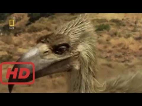 Prehistoric Predators - Birds Of Prey Lizards (Documentaries Nat Geo Wild Hd) Nat Geo Wild 2017