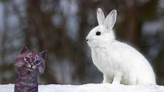 """Кошечка Лика Стихотворение про зайку """"Заяц"""" Почему зайка стал белым?"""