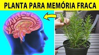 4 Plantas Que Ajudam A Melhorar Sua Memória