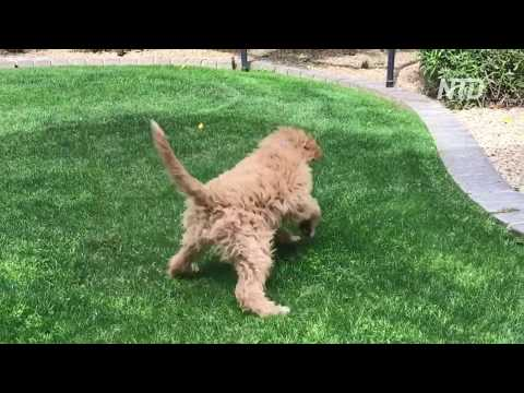 funny dog, funny puppy   TRY TO STOP LAUGHING - Super FUNNY VIDEOS compilation
