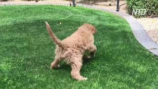 funny dog, funny puppy | TRY TO STOP LAUGHING - Super FUNNY VIDEOS compilation