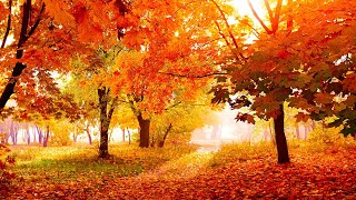 "Relaxing Beautiful Instrumental Music, Peace Instrumental Music ""Flowers in October"" By Tim Janis"