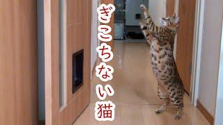 今回はゆきが猫じゃらしで遊んでいますが・・・。 あめは邪魔しに来るのでしょうか( ´∀` )笑 いつもご視聴ありがとうございます(^▽^) 初めま...