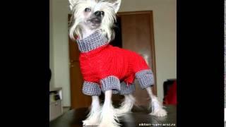 дешевая одежда для собак