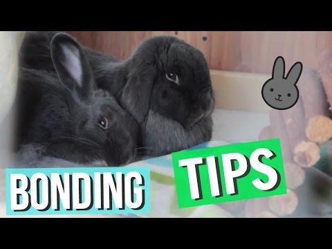 Bonding Rabbits - TIPS & Questions