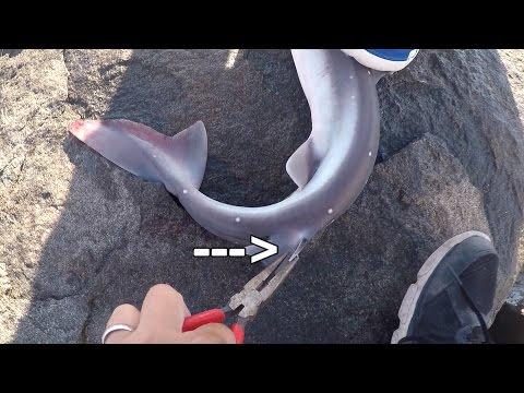 Fishing For Them SPINY SHARKS In Atlantic City!!! (Atlantic City, NJ)