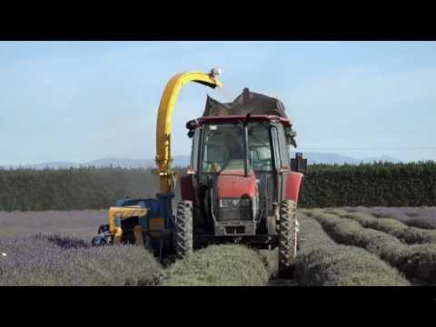 NZLavender Ltd on TV1's Rural Delivery