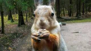 Путевые заметки: злонравная белка / Angry squirrel