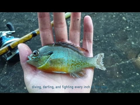 Migration of Eyes – Multispecies Micro Fishing