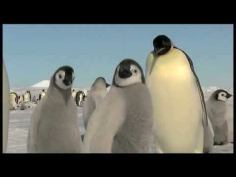 A Visit to the Emperor Penguins Rookery at Snow Hill Island, Antarctica