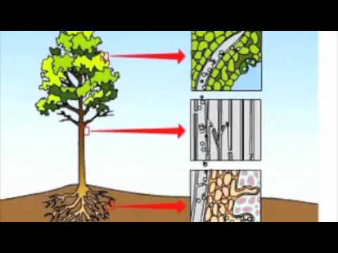 Transportation of Water in Plants - YouTube