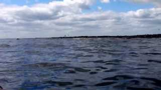 Coquet Island Race 2 June 2013