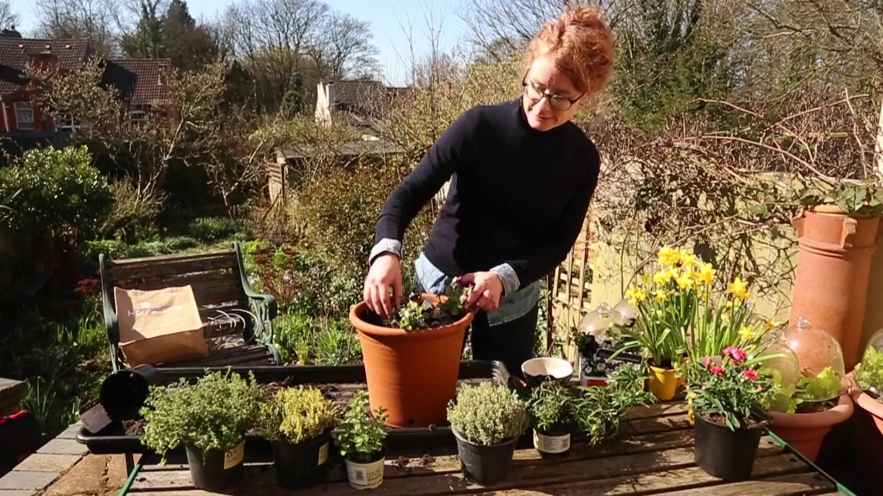 Homemade herb pots for Mother\'s Day with Alys Fowler - YouTube
