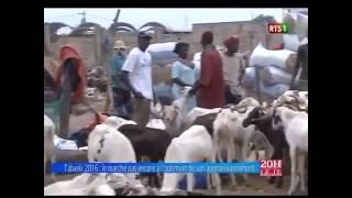 Tabaski 2016: les moutons sont chèrs pour le moment - Réaction des sénégalais