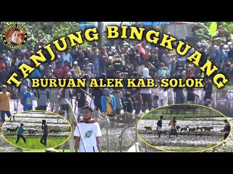 AKSI BINTANG BINTANG PARENTEN BURU ALEK TANJUANG BINGKUANG Part 1