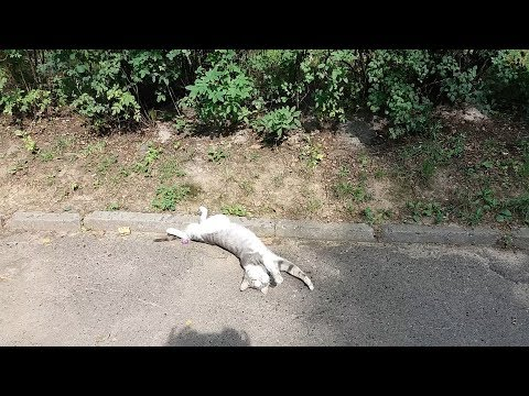 Cute Kitty Chillaxing On Street
