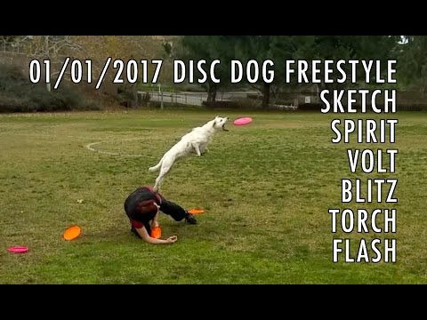 ★ Muddy Disc Dog Freestyle ★