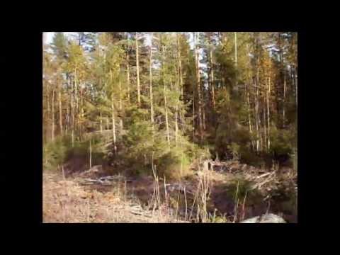 06.10.2013 Radio telescope and Forest