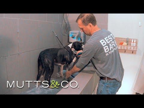 Product Highlight: Self-service Dog Wash