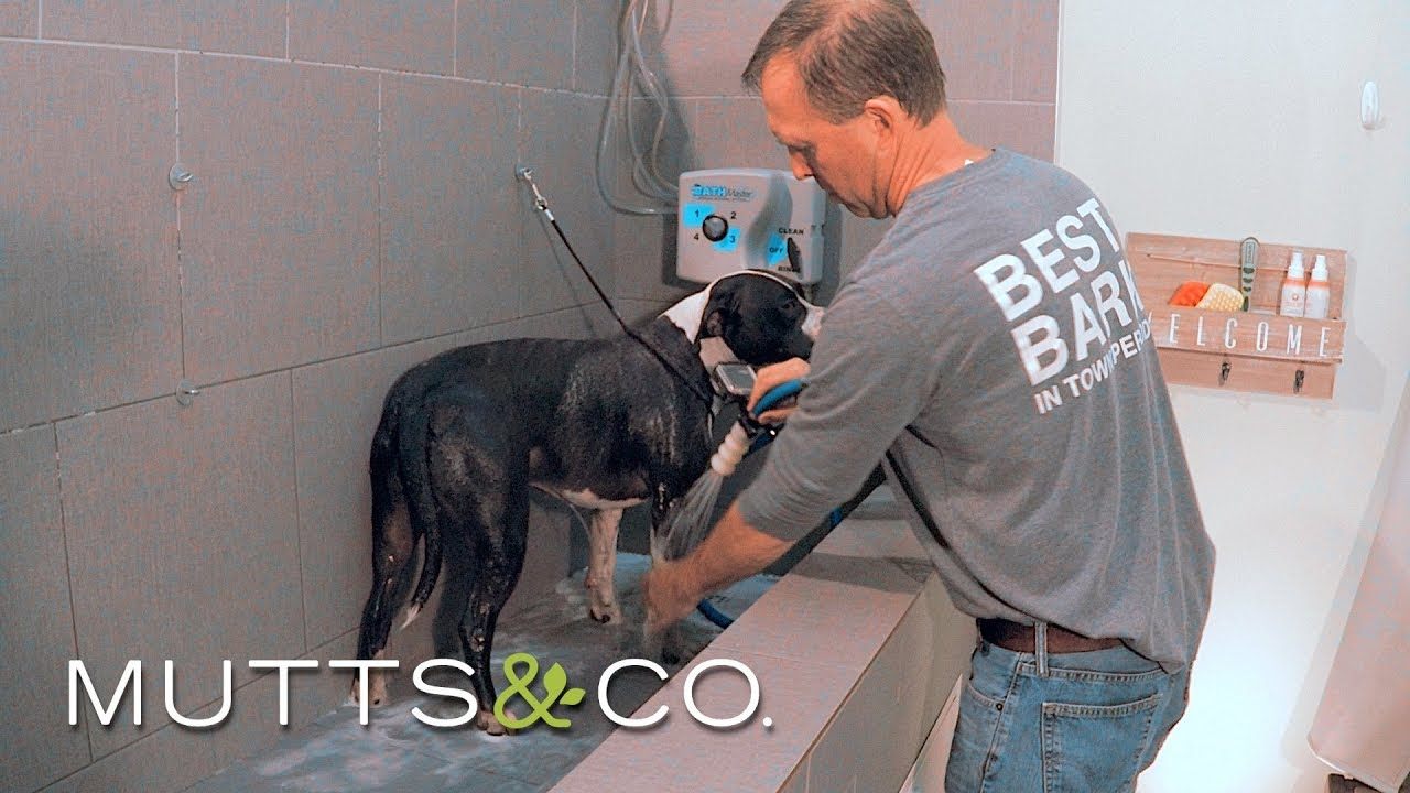 Product highlight self service dog wash youtube product highlight self service dog wash solutioingenieria Choice Image