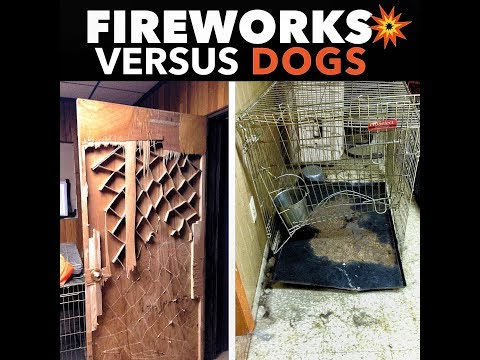 Dogs and fireworks (30+ proven techniques to eliminate noise