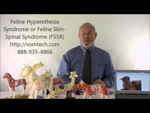 What is 'Feline Hyperesthesia Syndrome' or 'Feline Skin Spinal Syndrome FSSR' ?