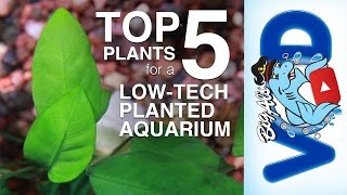Top 5 Plants for a Low-Tech Planted Aquarium | BigAlsPets.com