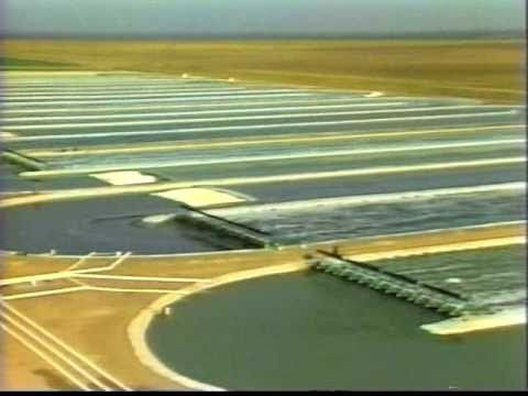 First Commercial Spirulina Farm in California
