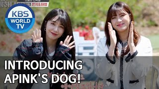 Introducing Apink's dog! [Dogs are incredible/ENG/2020.06.03]