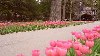 Spring at Notre Dame