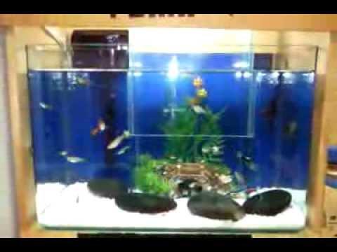 Connect two fish tanks alternative fill method diy aqua for Fish tank ice method