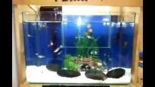 My Office Open Bottom Fish Tank