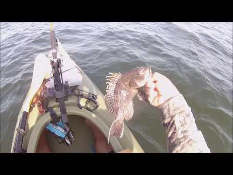 big weakfish!!!!!kayak fishing long island sound