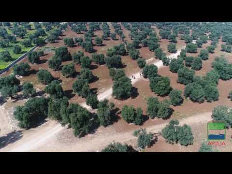 Apulia bike safari among old olive trees and farms