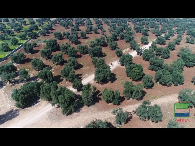 Apulia bike safari among old olive trees and farms