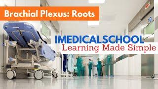 Medical School - Brachial Plexus - Roots