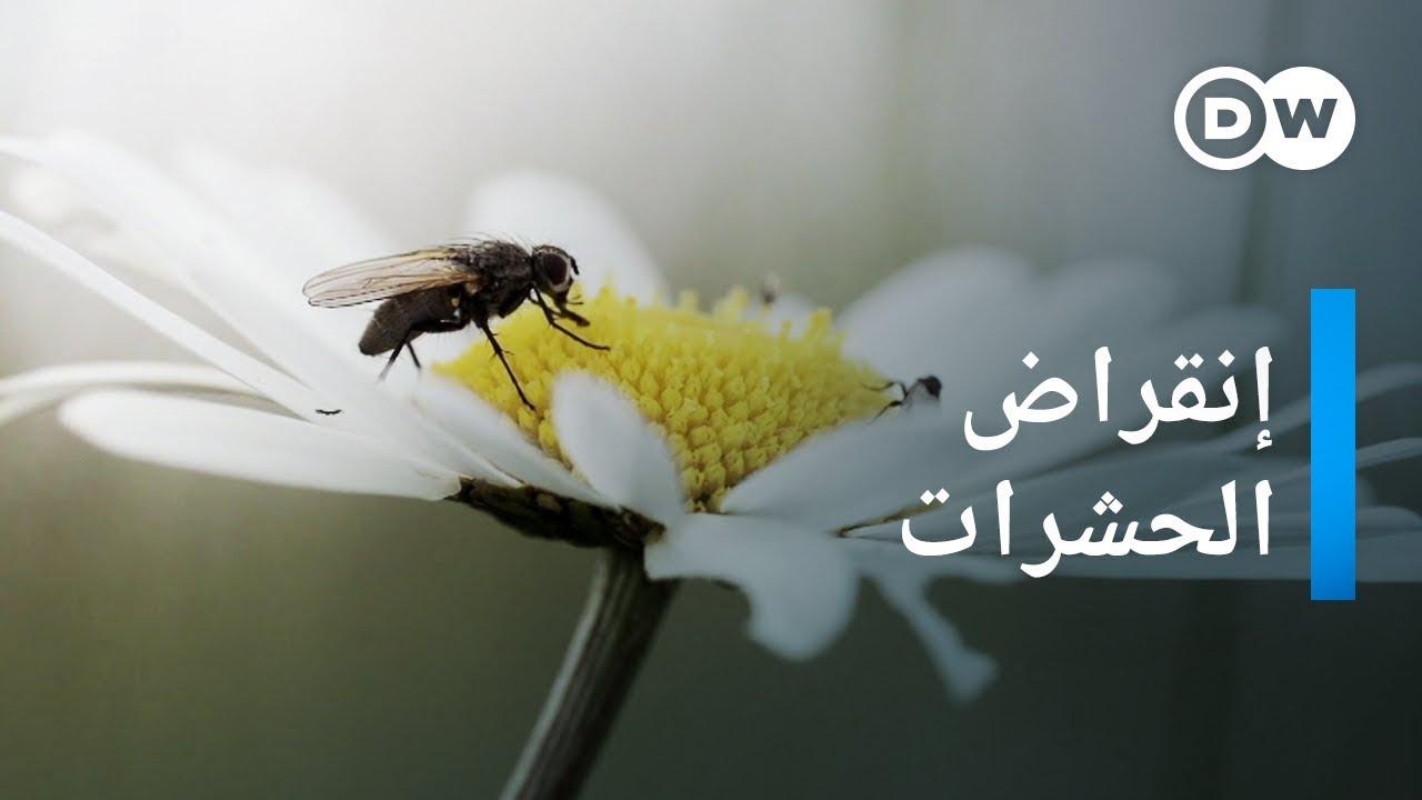 الحشرات على طريق الانقراض | وثائقية دي دبليو - وثائقي بيئة
