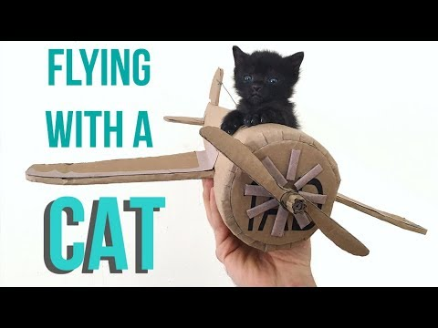 How to Fly With Your Cat