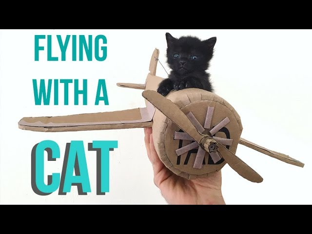 how-to-fly-with-your-cat
