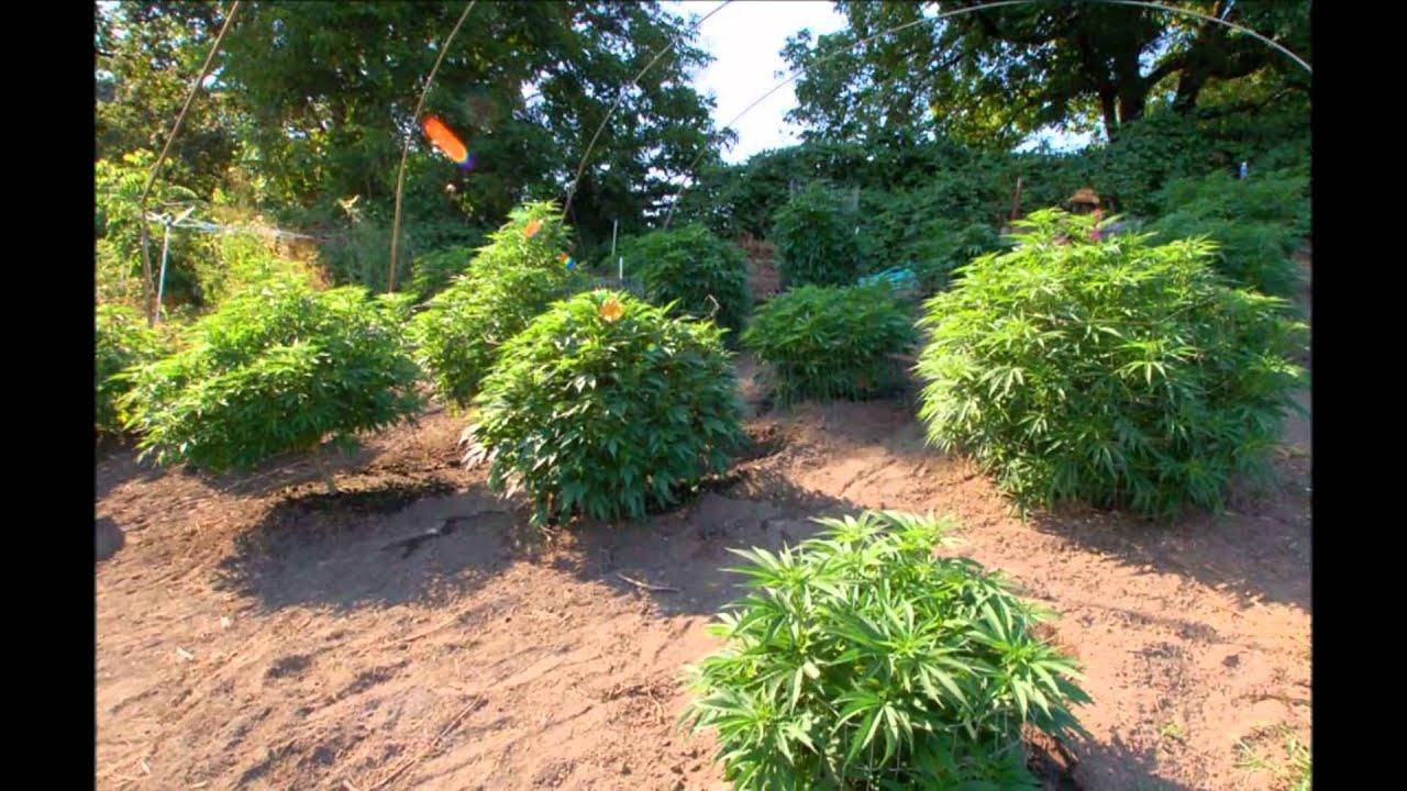 The Garden of Weeden Part 1wmv YouTube