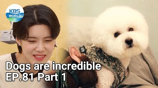 Dogs are incredible EP.81 Part 1 | KBS WORLD TV 210623