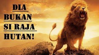 Kenapa Si Raja Hutan? Bukannya Raja Rimba?! Inilah 10 Informasi Menarik Tentang Singa