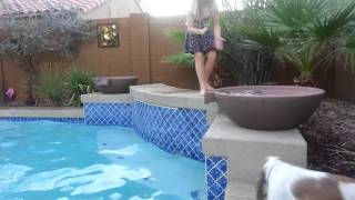 American Cocker Spaniel Dives From Highest Point
