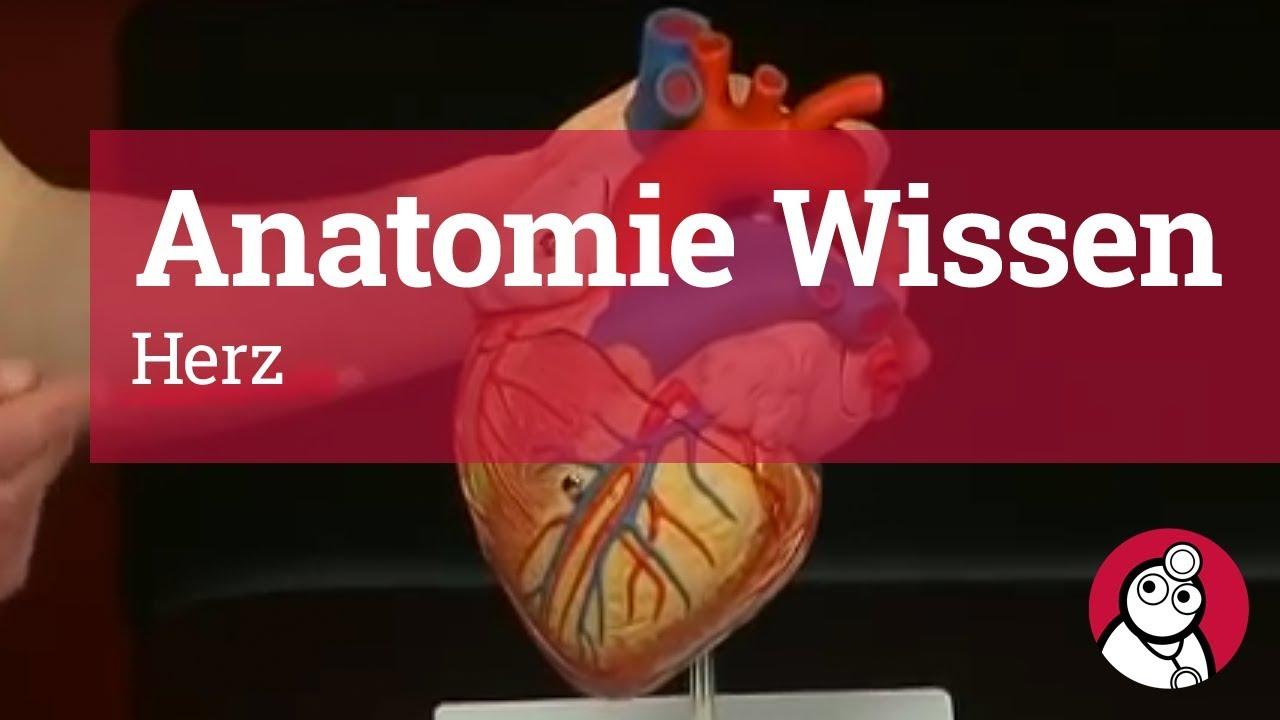 Anatomie-Wissen: Herz - YouTube