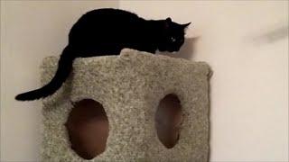 Дом для котов(Как сделать дом для котов своими руками. Делаем из фанеры четырехэтажный домик для кошки. Вырезаем окна..., 2014-09-22T07:16:23.000Z)