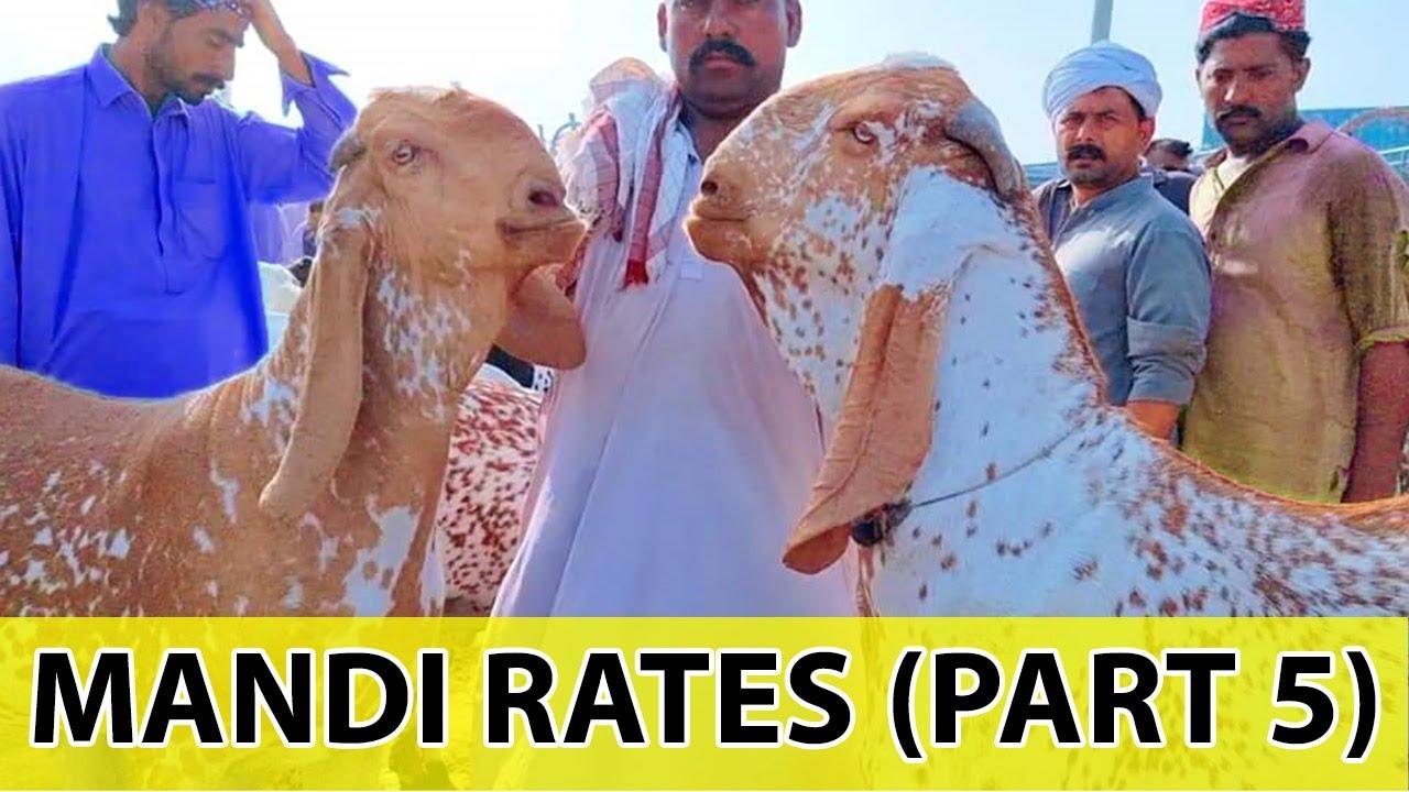 Bhatta Chowk Mandi 2021 | Bakra Prices (Part 5) | Mandi Rates Info